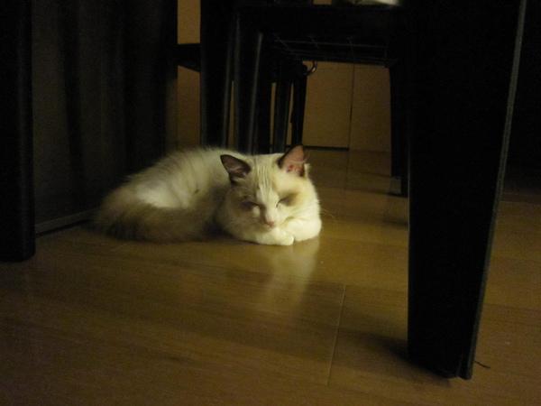 2010.9.1換到飯桌下去睡