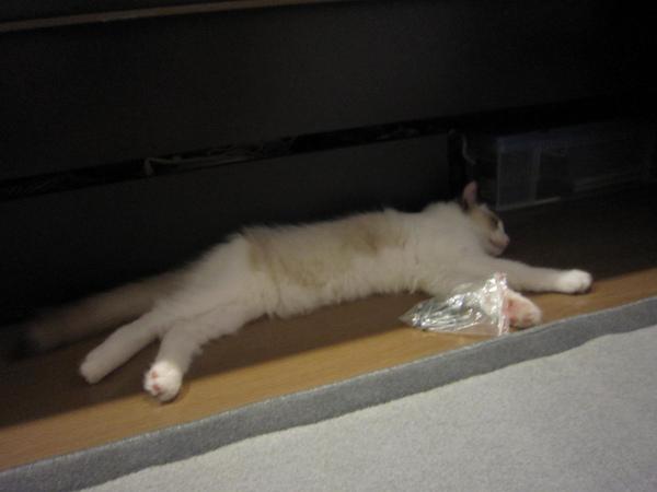 2010.8.26回到家陪在媽媽身邊組裝貓樹結果呼呼大睡