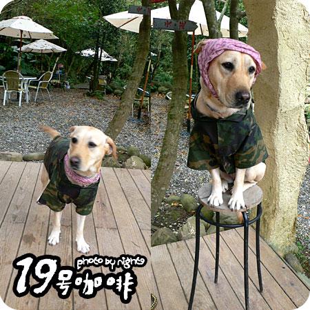 19號咖啡~店犬BO