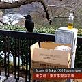 東京第一日.漂亮的烏鴉