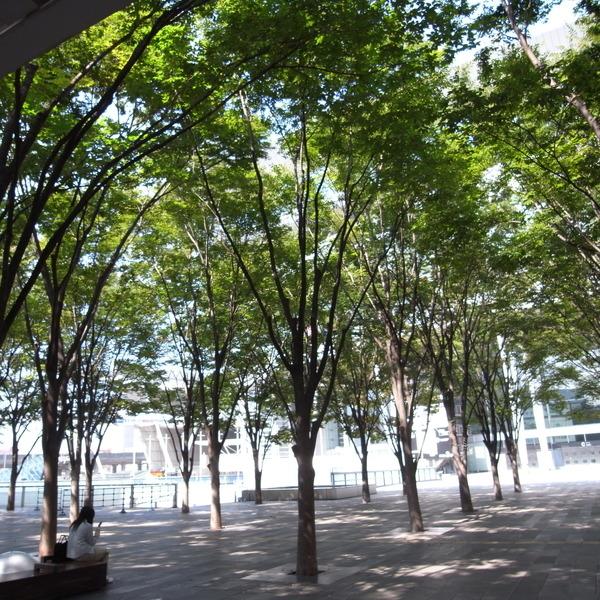 很舒服的樹林公園