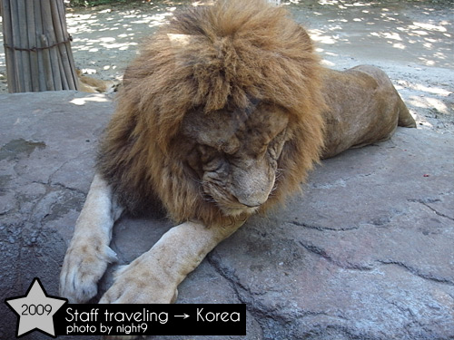 愛寶樂園~野生樂園獅子
