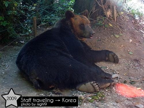 愛寶樂園~野生樂園棕熊