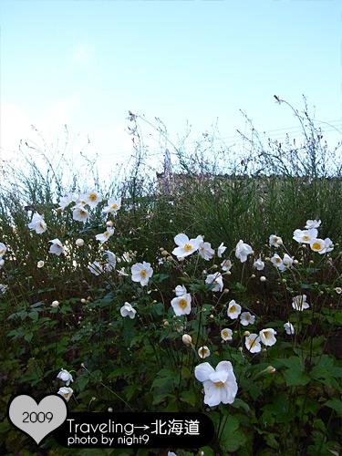 公園裡的花兒很漂亮
