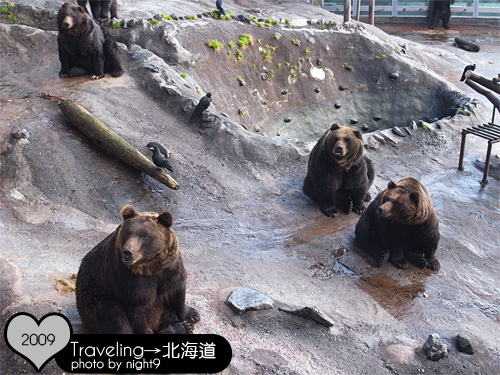 這裡是公熊先生的宿舍