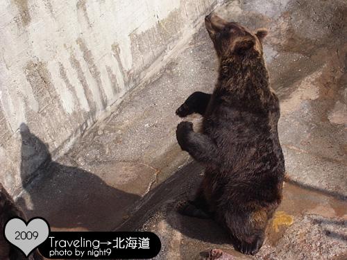 站起來要餅乾的熊兒