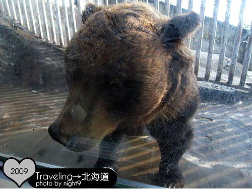 隔著玻璃吃餅乾的熊兒