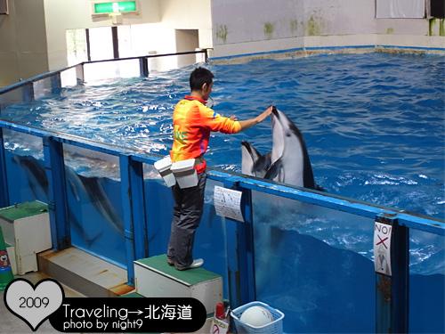 尼克斯樂園‧海豚表演