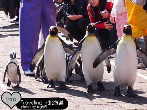 尼克斯樂園‧企鵝散步