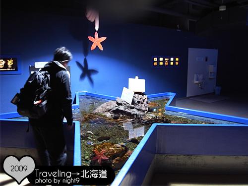 尼克斯樂園‧水族館海星體驗