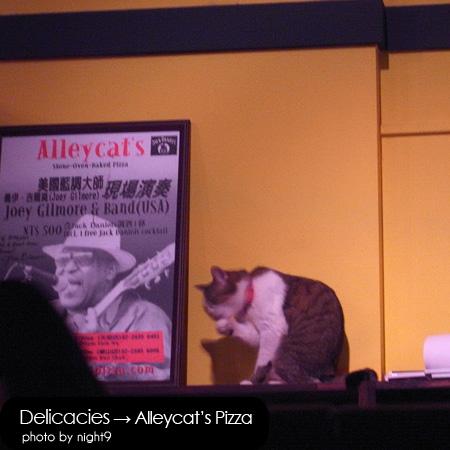 Alleycat's‧店貓