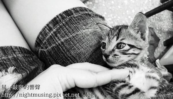 日常沉迷小貓子.jpg