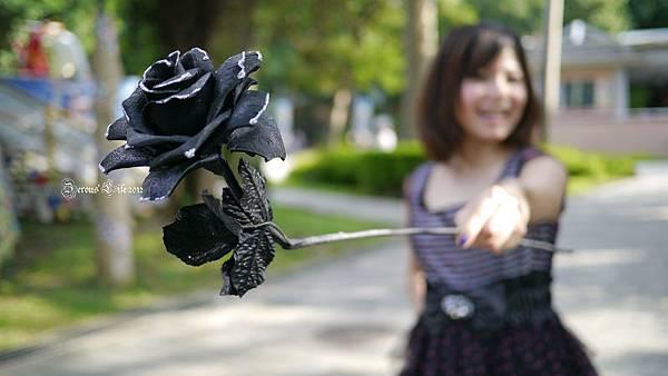 P1020331-黑玫瑰