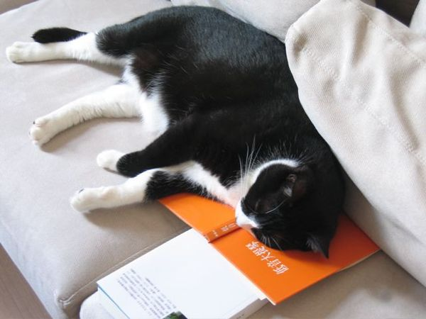 襪子愛看書