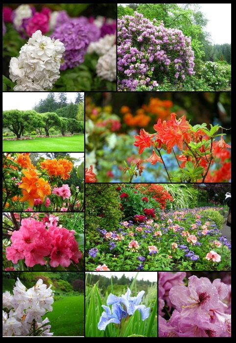 布查花園8