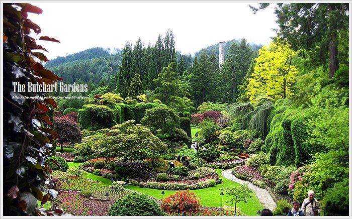 布查花園11
