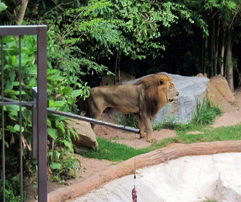 動物園17