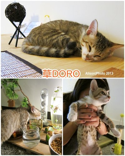 草DORO08