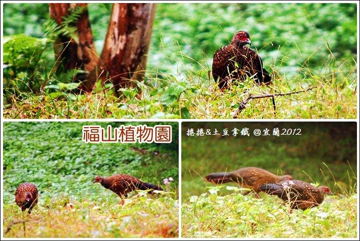 福山植物園12