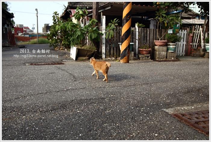 台南貓村-