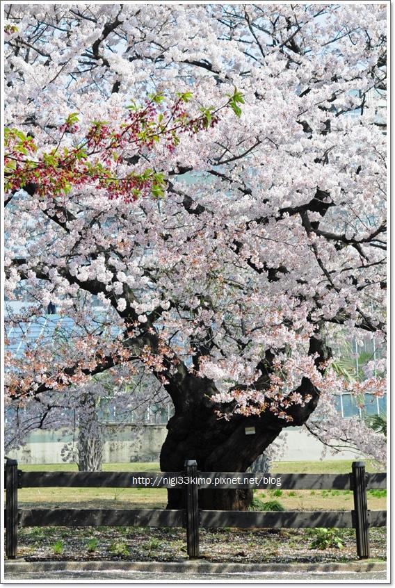 新宿御苑5.jpg