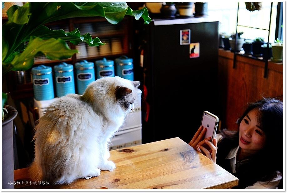 仁庵貓咖啡