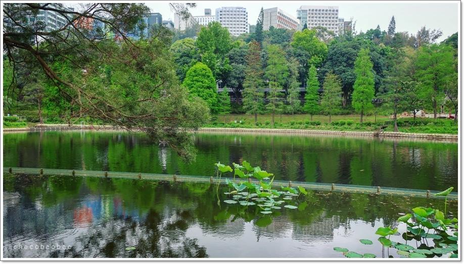 香港未圓湖2.JPG