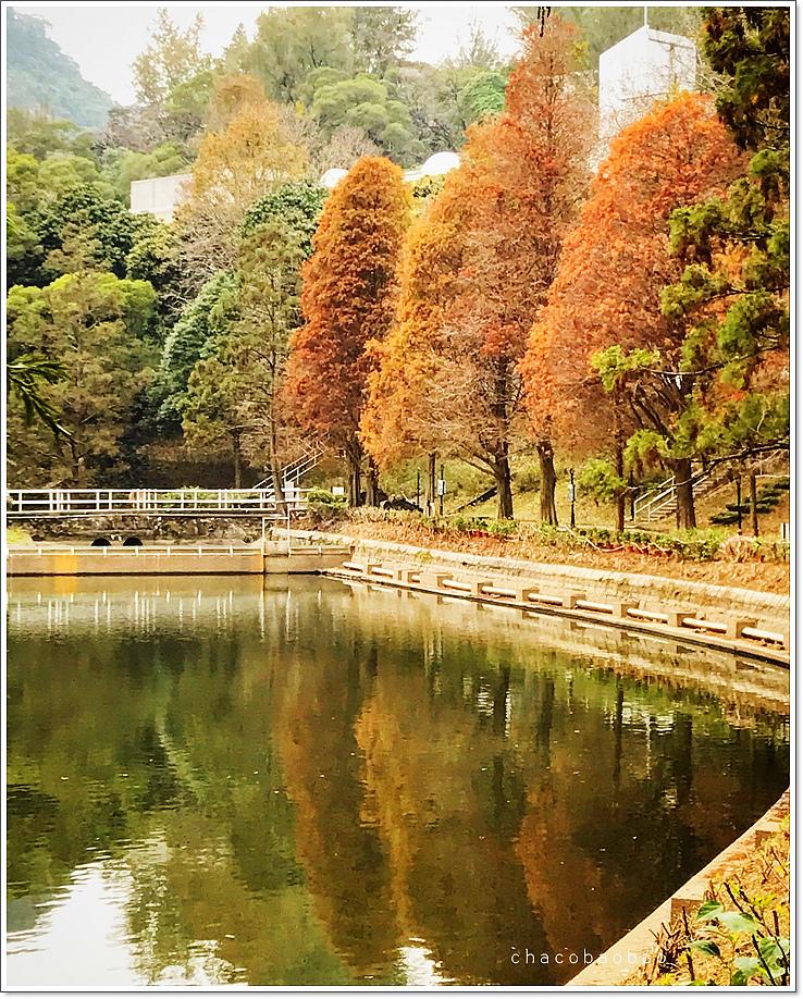 香港未圓湖6.jpg