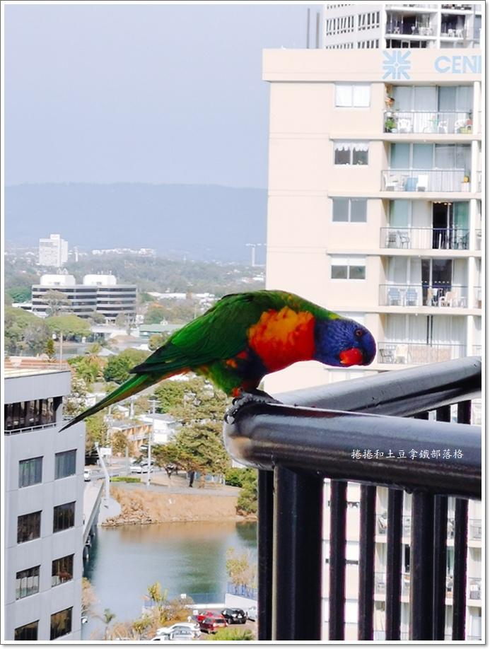 黃金海岸MANTRA ON VIEW HOTEL-15.jpg