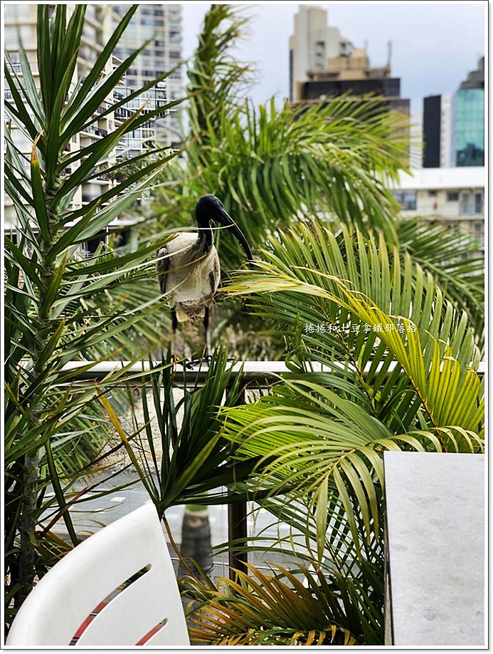 黃金海岸MANTRA ON VIEW HOTEL-25