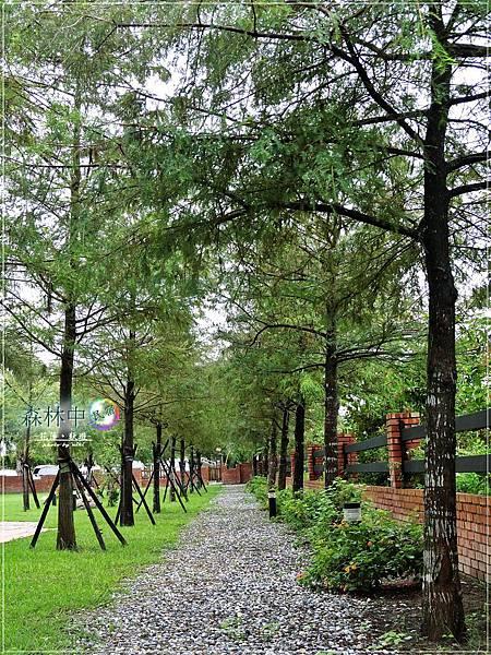 森林中民宿