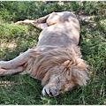 獅子園 Lion and Safari Park