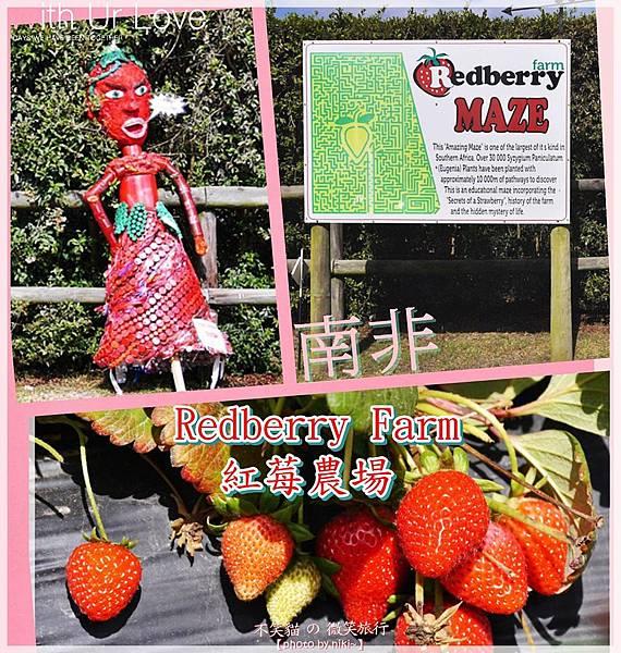 Redberry Farm紅莓農場