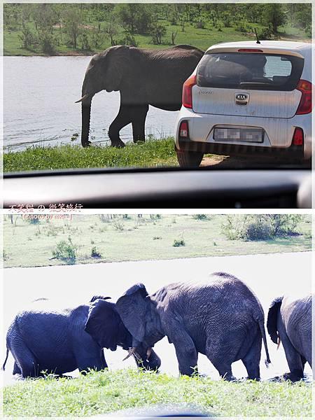 克魯格爾國家公園 Kruger National Park