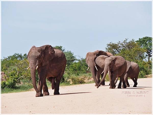 Kruger National Park克魯格國家公園