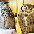 大阪貓頭鷹咖啡Happy Owl Cafe Chouette