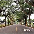 潮州旅遊景點_潮州綠色隧道/泗林健走步道