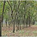 屏東潮州旅遊景點_大武山下.林後四林平地森林園區