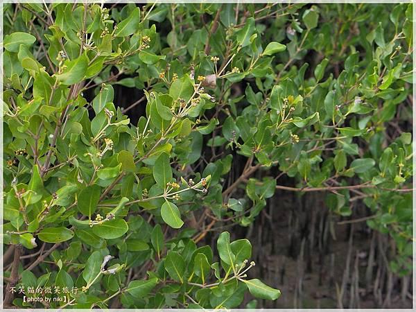 高雄生態旅遊景點_林園海洋濕地公園(12號公園