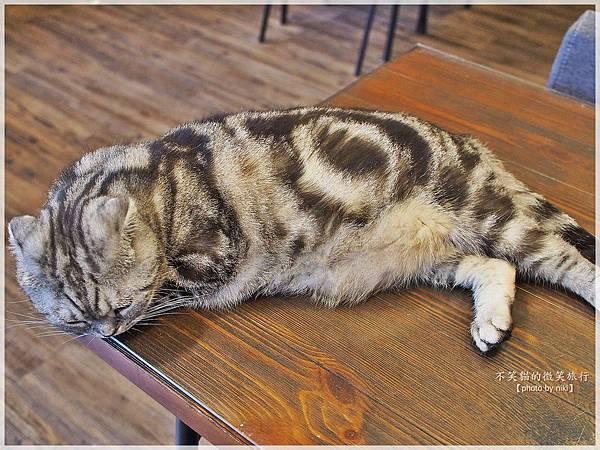 新北板橋寵物餐廳_放懶貓日子FunLife-Gelato Cats Café