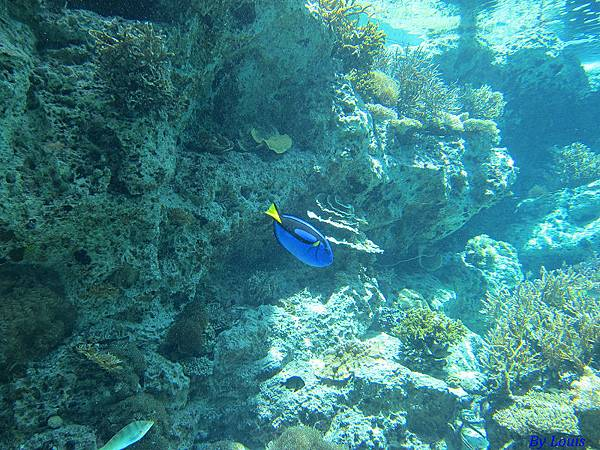 海洋博_7080.jpg