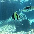 海洋博_7090.jpg