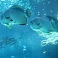 海洋博_7103.jpg