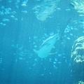 海洋博_7104.jpg