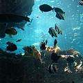 海洋博_7118.jpg
