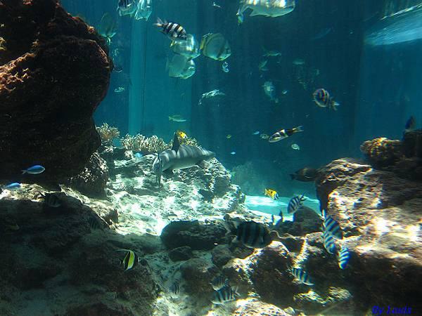 海洋博_7121.jpg