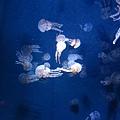 海洋博_7138.jpg