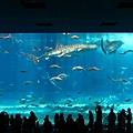 海洋博_7154.jpg
