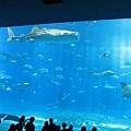 海洋博_7157.jpg