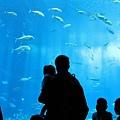 海洋博_7162.jpg